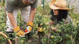 חקלאות, צילום: freepik