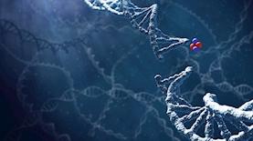 שתיל Alpha DaRT מכוסה רדיום-224 משחרר חלקיקי אלפא אל תוך הגידול