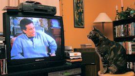חתול צופה בסיינפלד, צילום: Chuck Olsen / flickr