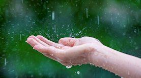 כף יד בגשם, צילום: tawatchai07 / freepik